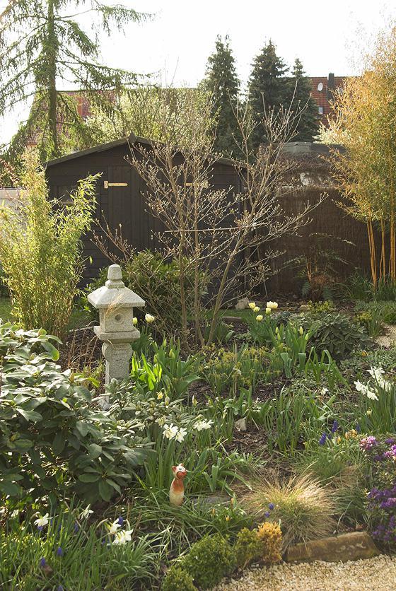 Japanischer Ahorn Treibt Nicht Aus Mein Schoner Garten Forum