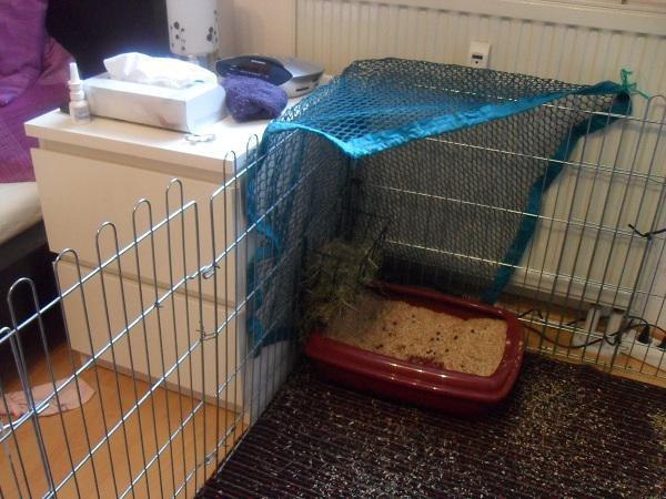 kaninchenforum das kaninchen forum online babynin zu lteren kaninchen. Black Bedroom Furniture Sets. Home Design Ideas