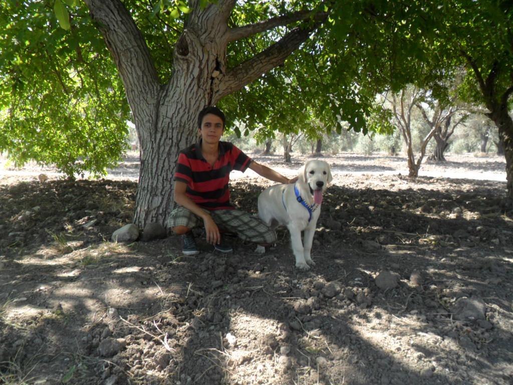 Mersin'de Korkunç Köpek Cinayeti