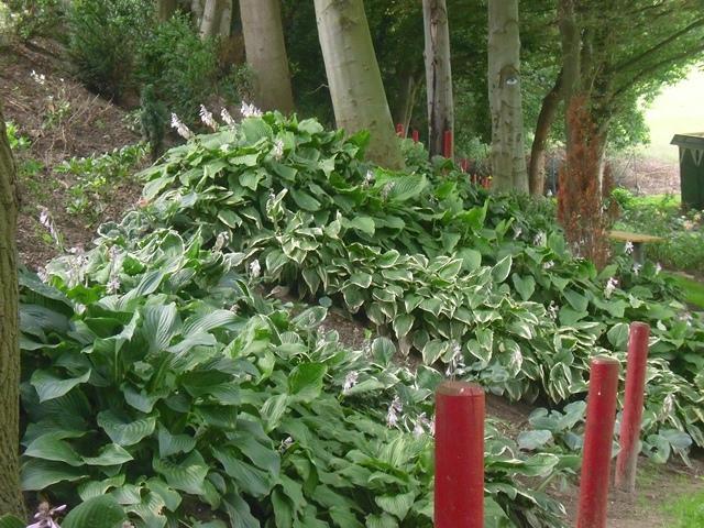 Die mitteldeutschen in sommerlaune seite 7 - Schattengarten gestalten ...