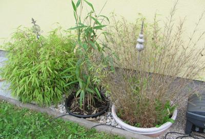 Was Tun Mit Bambus Mein Schoner Garten Forum