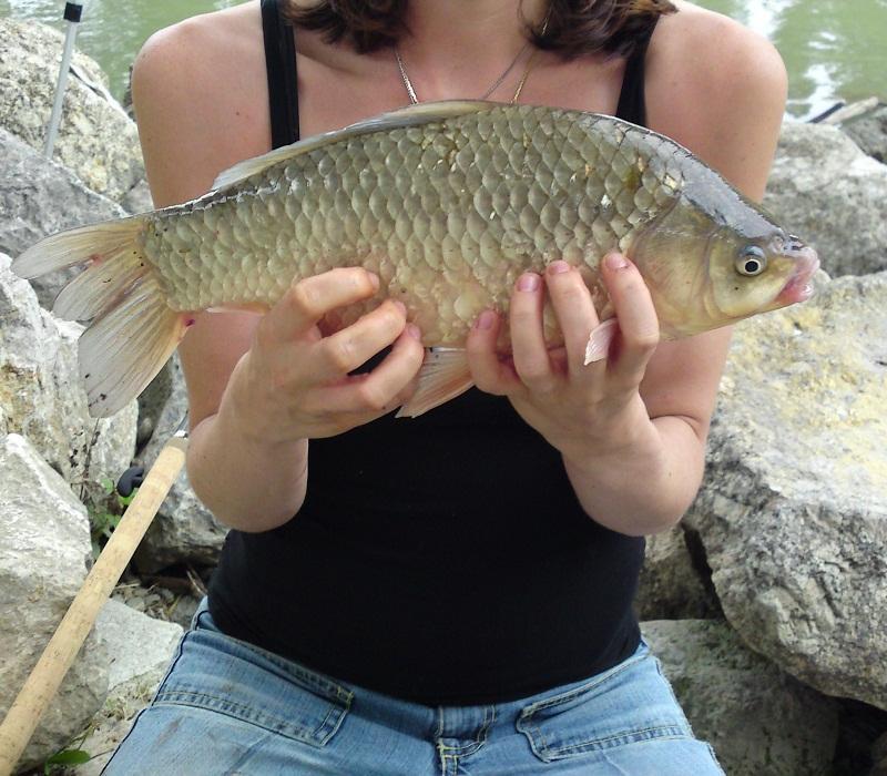 Donau fische arten und unterscheidung die fischarten und for Fische arten