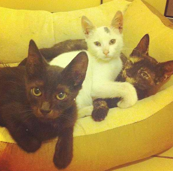 3 shades of CUTE seek a home C718ff9flmq21vb3f