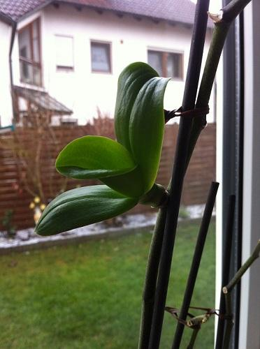 komische orchidee fragen orchideenforum. Black Bedroom Furniture Sets. Home Design Ideas