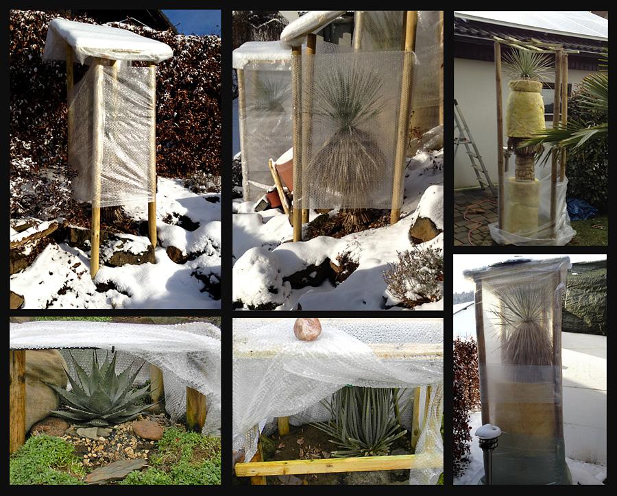 ein kleines yucca update yuccas agaven cordyline. Black Bedroom Furniture Sets. Home Design Ideas