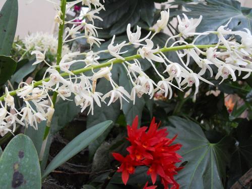 die sch nsten orchideen bilder seite 9 foto treff. Black Bedroom Furniture Sets. Home Design Ideas