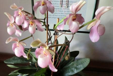 die sch nsten orchideen bilder page 10 mein sch ner. Black Bedroom Furniture Sets. Home Design Ideas