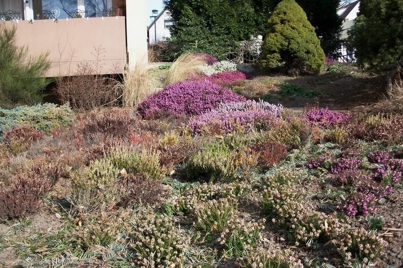 Winterheide und lavendel seite 1 gartengestaltung for Gartengestaltung lavendel