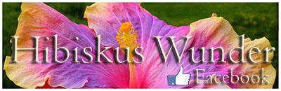 Hibiskus Wunder Facebook Fansite international IHS