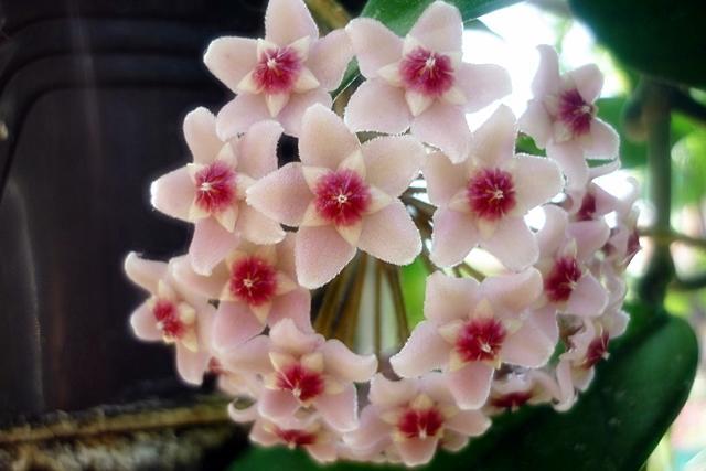 Blüten 2013 - Seite 5 Cehu9mok006mv2tsg