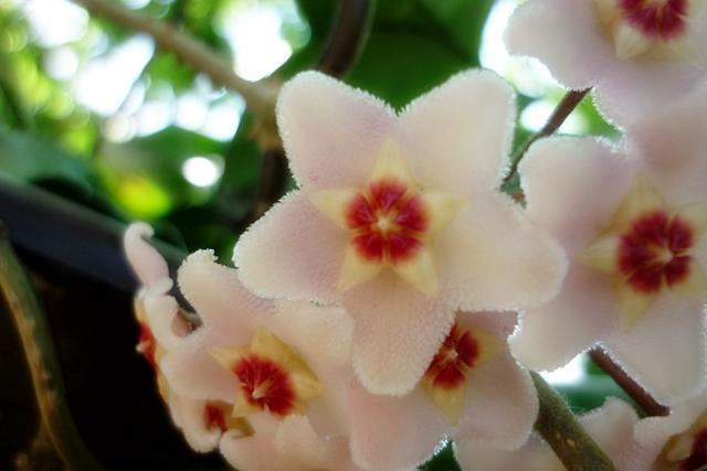 Blüten 2013 - Seite 5 Cehuad43sefc0m9n4