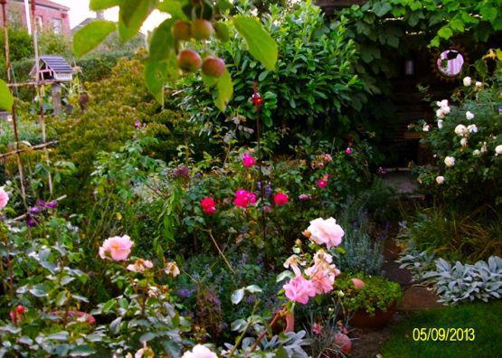 Rose Benjamin Britten Page 2 Mein Sch Ner Garten Forum