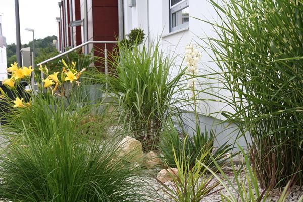 Gräser vorgarten