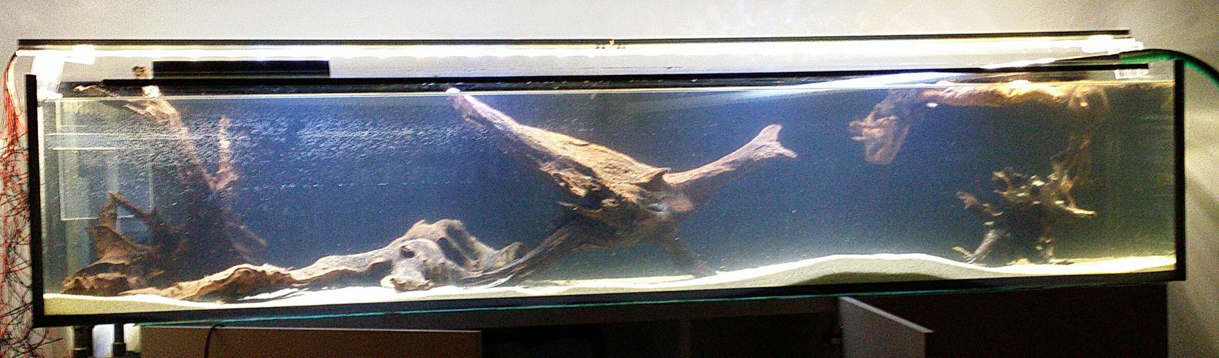 neues becken 200x40x40 seite 2 unsere aquarien vorgestellt aquaristik forum. Black Bedroom Furniture Sets. Home Design Ideas