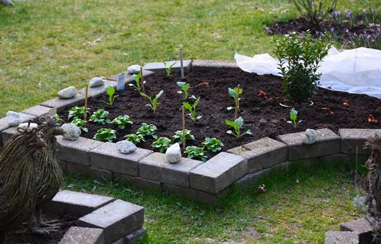 Gemusebeet umrandung for Gartengestaltung umrandung