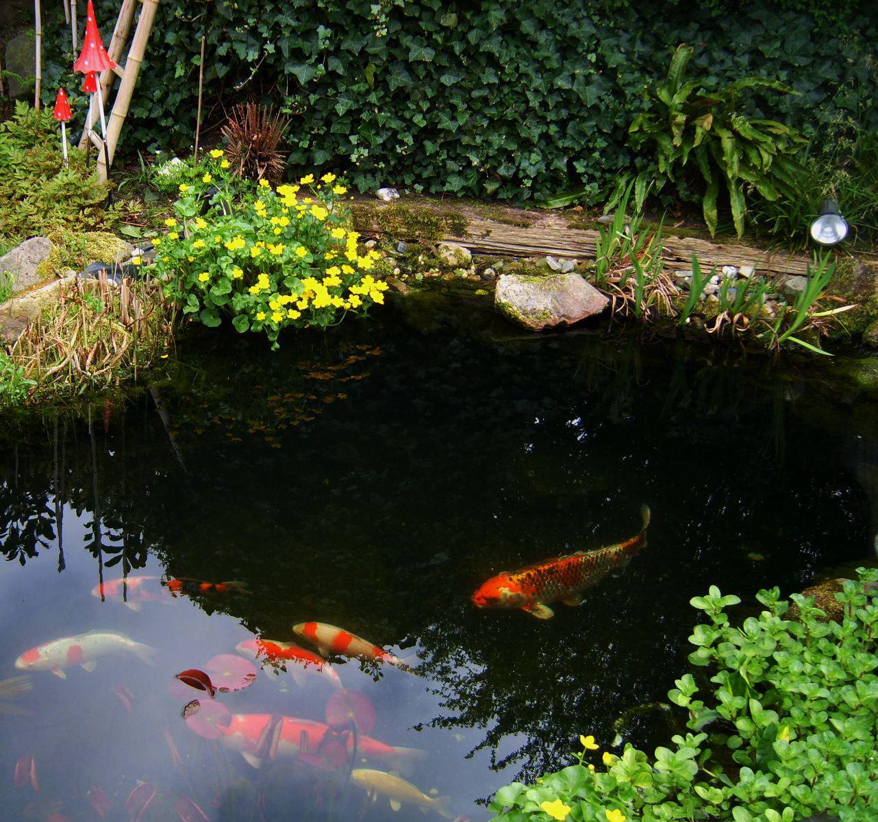 Los gehts mit dem teichbau seite 46 gartenteich mein for Goldfische im miniteich