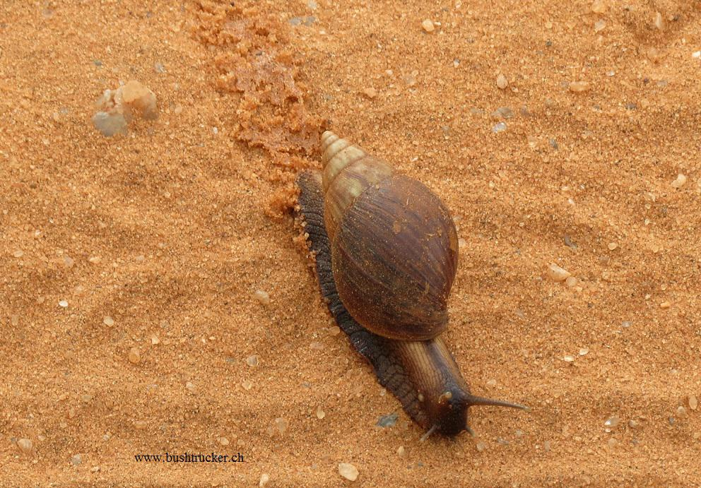 REISEBERICHTE » Tsavo West