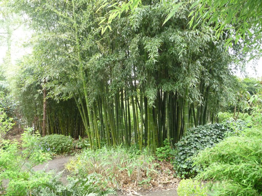 palmen und co besuch im bambusland kimmei in nl. Black Bedroom Furniture Sets. Home Design Ideas