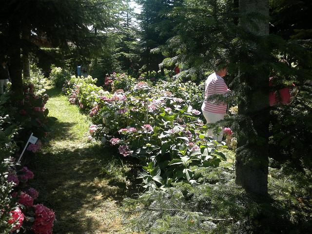 Waldgarten   ideen gesucht   seite 1   gartenpraxis   mein schöner ...
