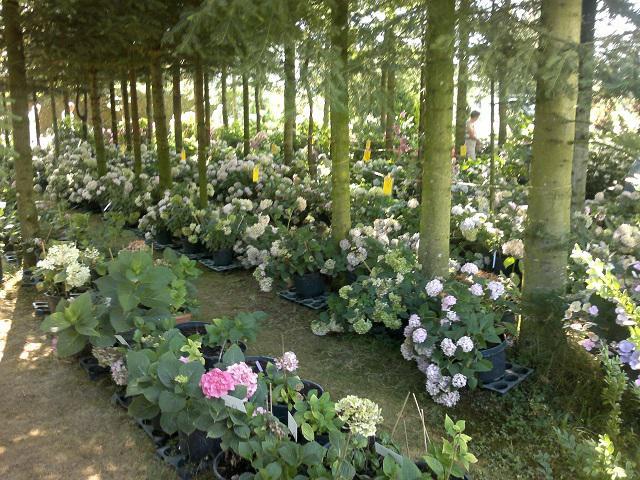 waldgarten - ideen gesucht - seite 1 - gartenpraxis - mein schöner, Garten seite