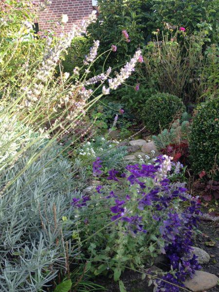 Eure Gartenbilder Beete Undgestaltungsideen Herbst 2014