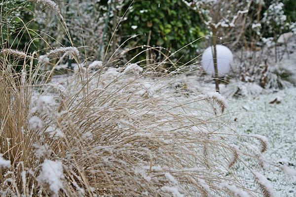 red baron gras winter
