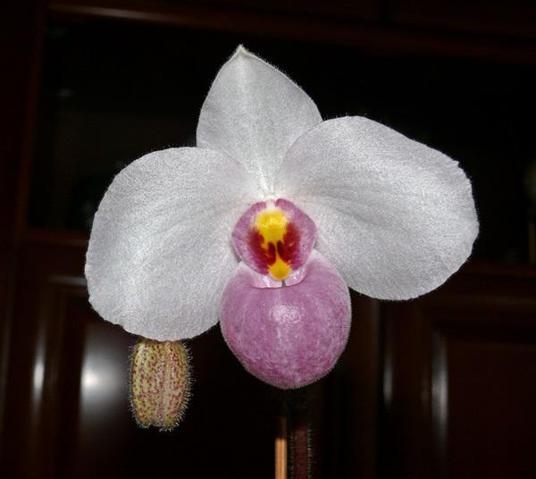 orchidee und wie weiter page 106 mein sch ner garten forum. Black Bedroom Furniture Sets. Home Design Ideas