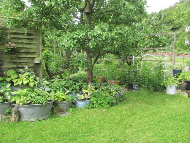 Bepflanzte zinkwanne seite 1 gartengestaltung mein for Gartengestaltung zinkwanne