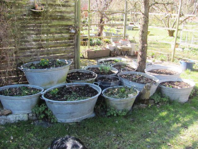 Bepflanzte zinkwanne seite 6 gartengestaltung mein for Gartengestaltung zinkwanne