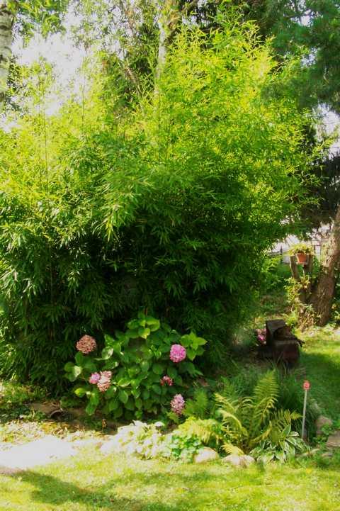 Welche Straucher Als Sichtschutz Page 2 Mein Schoner Garten Forum