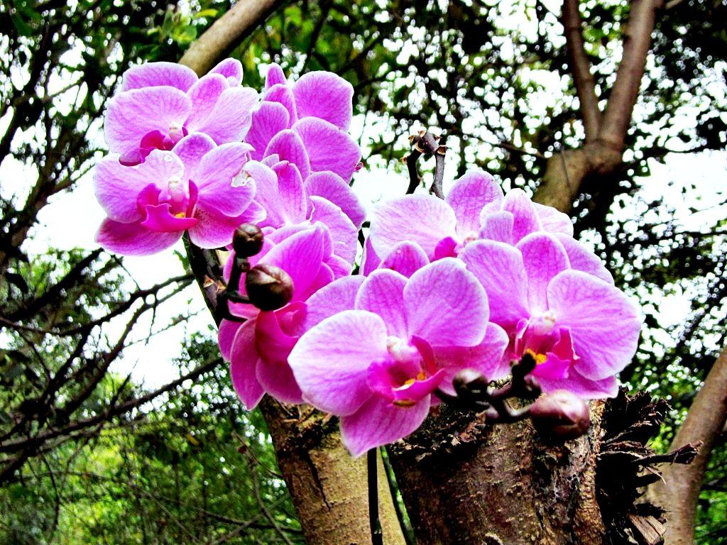 Как растет цветок орхидеи фото