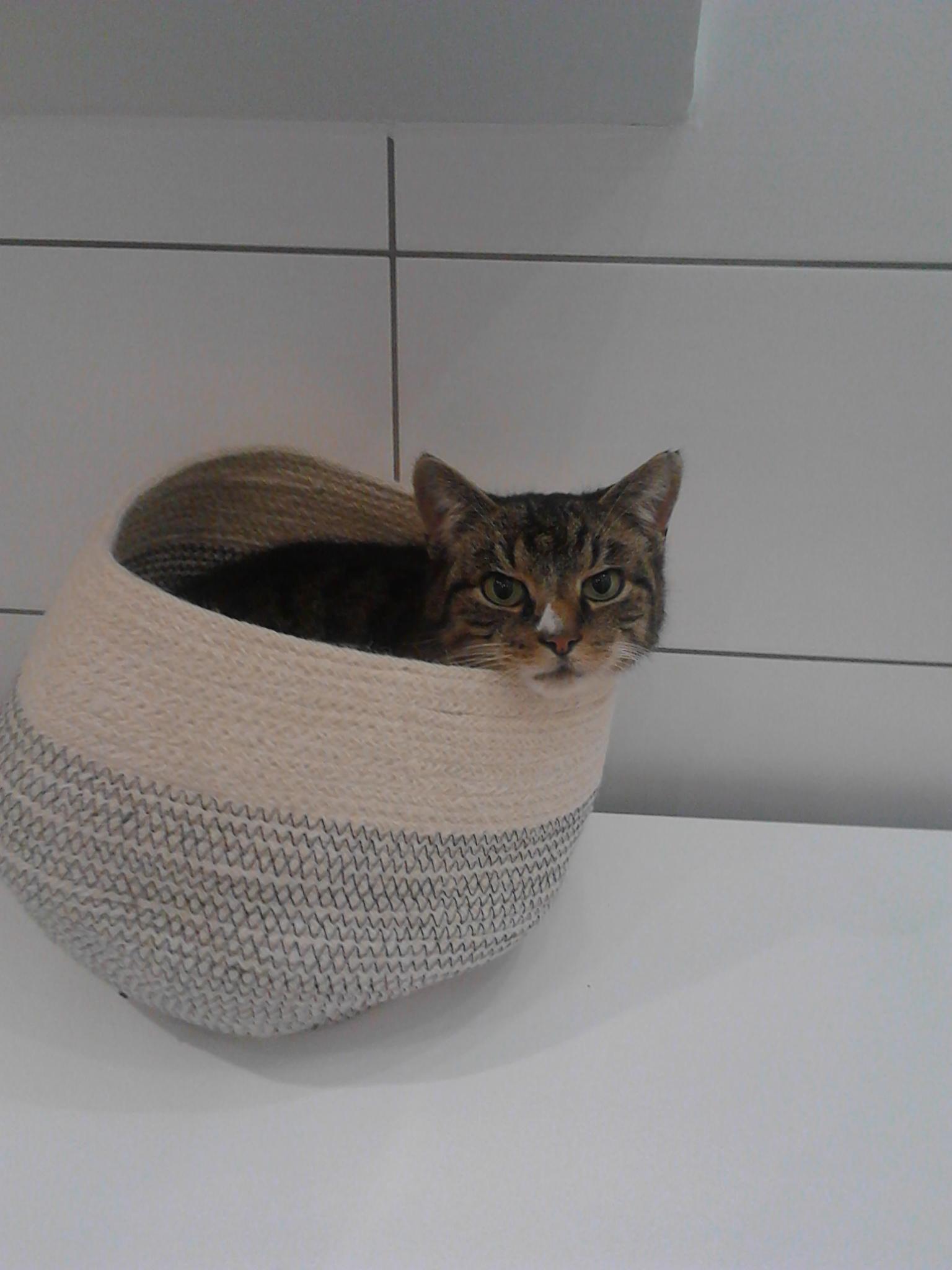 Katzenkorb mal anders