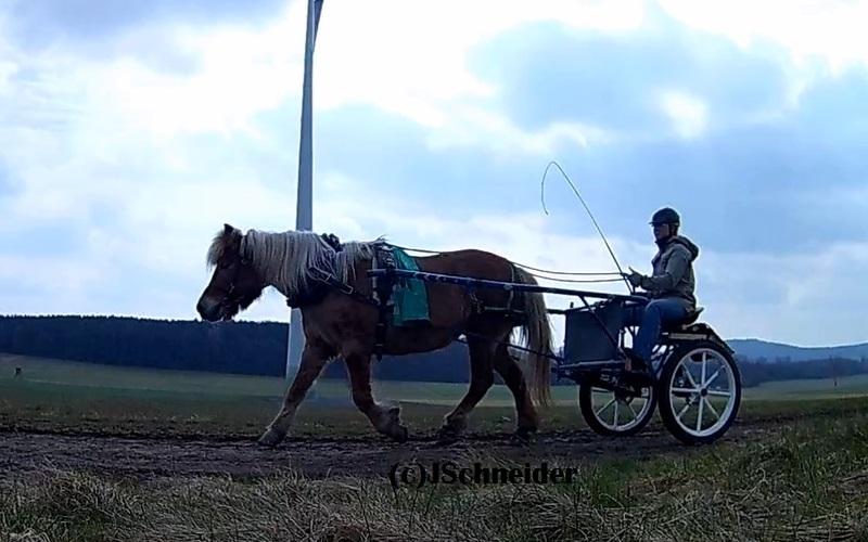 Foto vom Pony vorm Sulky