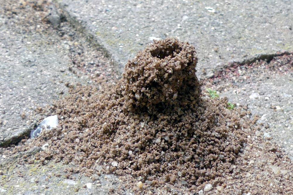 Ameisenwerk