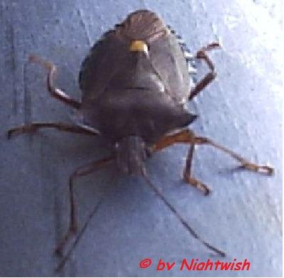 kleine schwarze käfer in der küche
