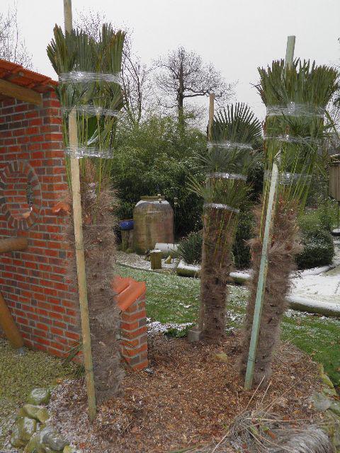 Berühmt Palmen und Co. » auch im westen alles winterfest...unsere #MK_01