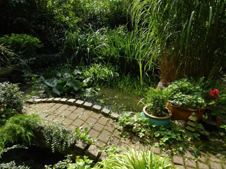 Häufig Haus mit Teich und Problemen gekauft | Hobby-Gartenteich LU86